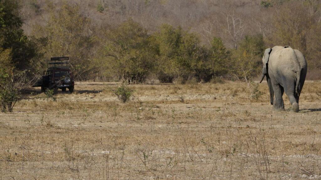Elefant und unser Jeep, mit dem wir die Tour durch den Mole-Park machten