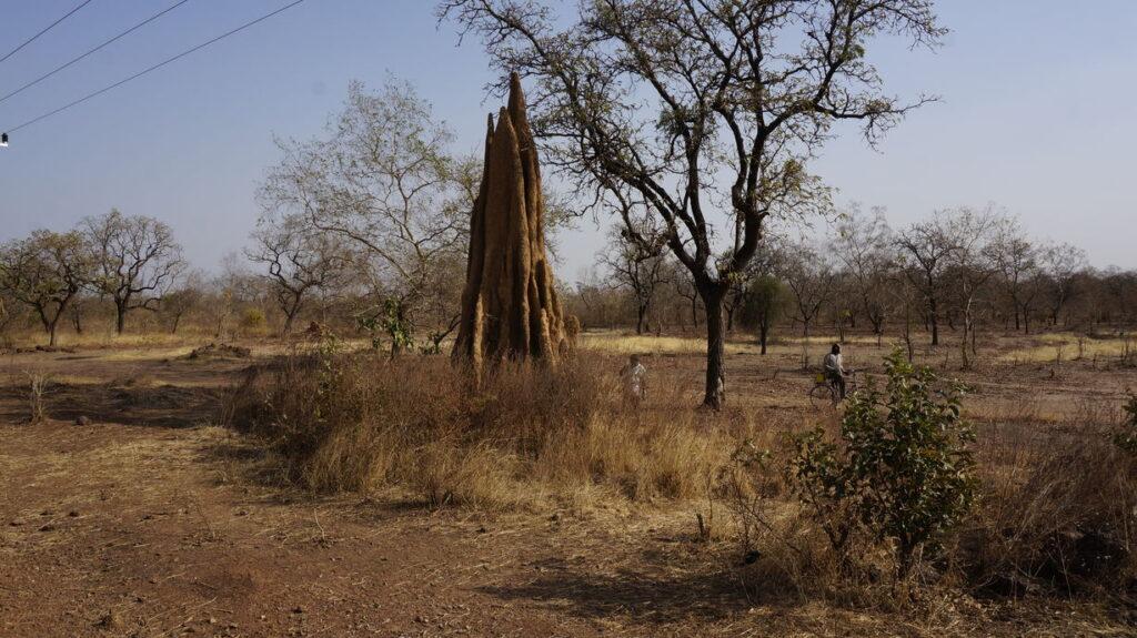 Ein riesiger Termitenbau
